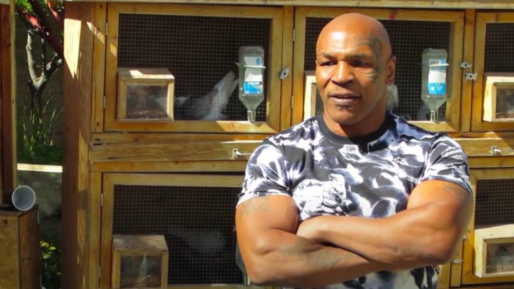 Mike Tyson et son habitat pour les pigeons