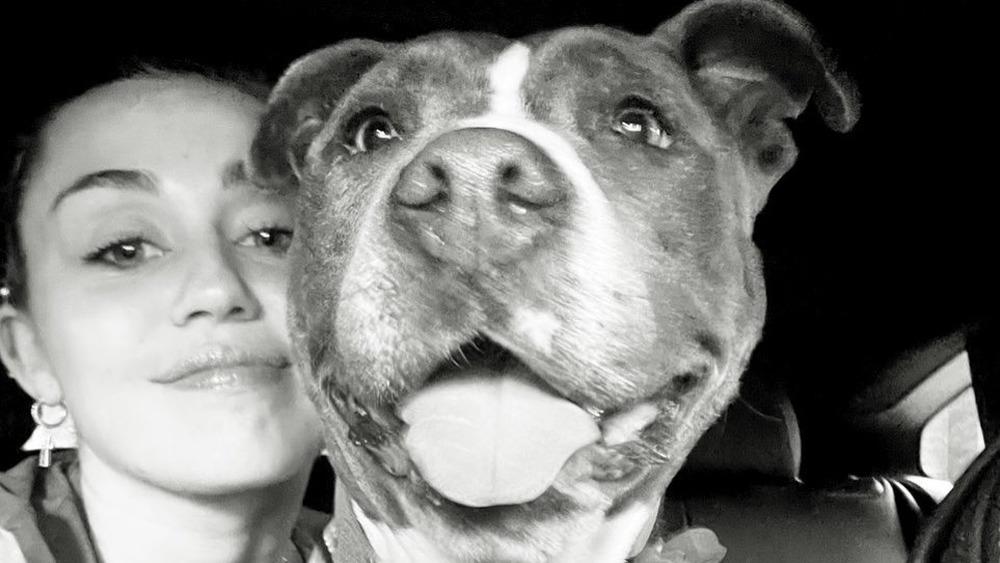 Miley Cyrus et son chien Angel